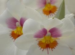 I fioristi di FlorArte 2014