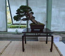 Arenzano Bonsai – Mostra di bonsai e suiseki