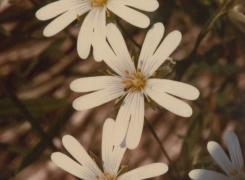 Fiori e piante di Arenzano