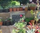Il giardino-vivaio di Ciancavare'