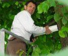 Curare gli alberi